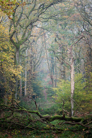 Autumn in Badby Woods